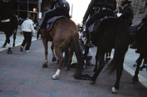 Houston horses
